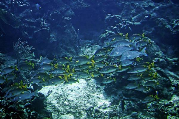 Photograph - Underwater by Tatiana Travelways