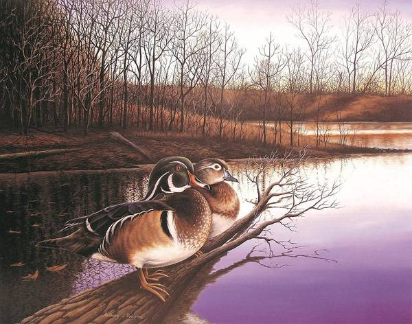 Painting - Undisturbed - Wood Ducks by Anthony J Padgett