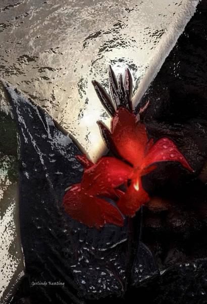 Photograph - Une Belle Fleur by Gerlinde Keating - Galleria GK Keating Associates Inc