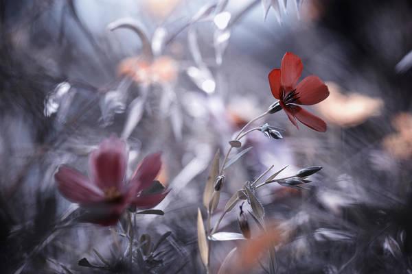 Red Flower Photograph - Une Fleur, Une Histoire by Fabien Bravin