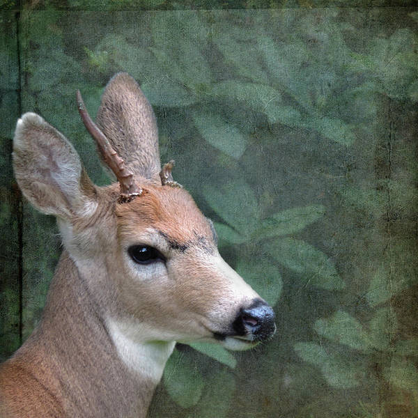 Photograph - Unicorn Deer by Sally Banfill