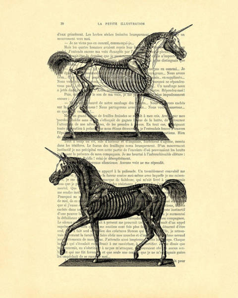 Myth Wall Art - Digital Art - Unicorns Anatomy by Madame Memento