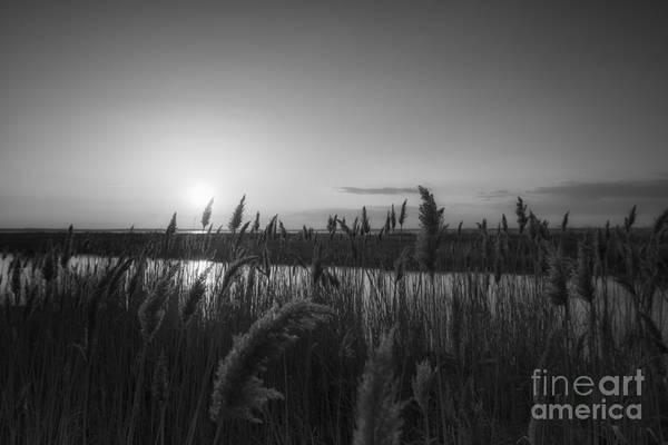 Marsh Grass Photograph - Union Beach Sunset Bw by Michael Ver Sprill