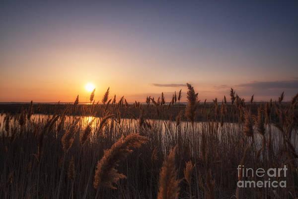 Marsh Grass Photograph - Union Beach Sunset  by Michael Ver Sprill