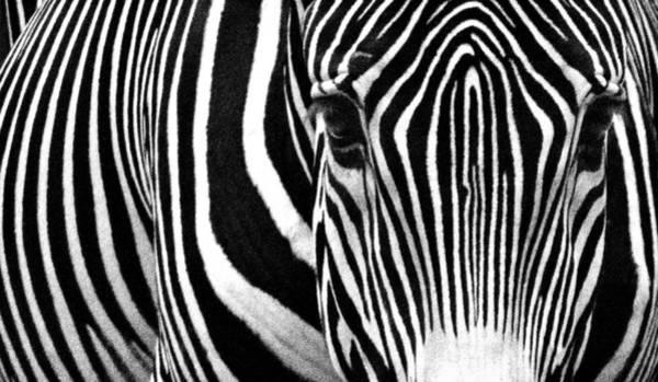 Photograph - Unique Fingerprint  by Donna Pagakis