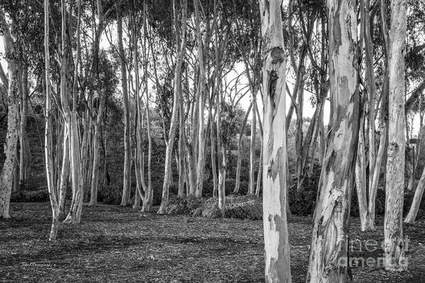 Wall Art - Photograph - University Of California San Diego Landscape by University Icons