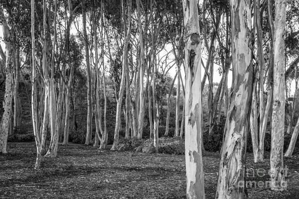 Photograph - University Of California San Diego Landscape by University Icons
