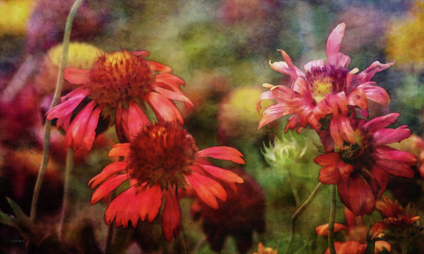 Photograph - Unkempt Beauty 2467 Idp_2 by Steven Ward