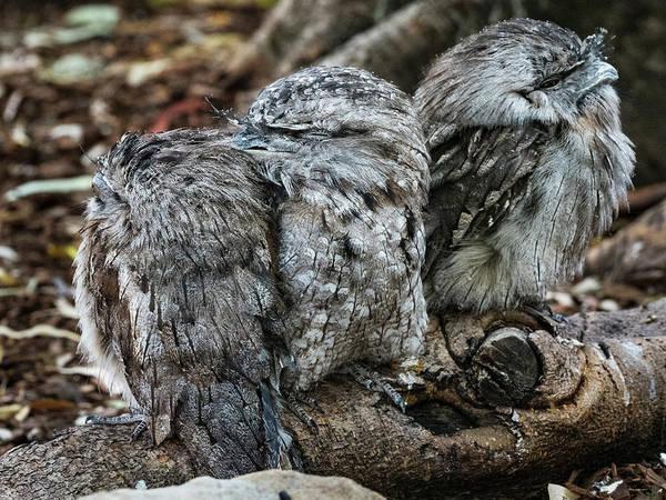 Photograph - Unknown Bird by Walt Sterneman