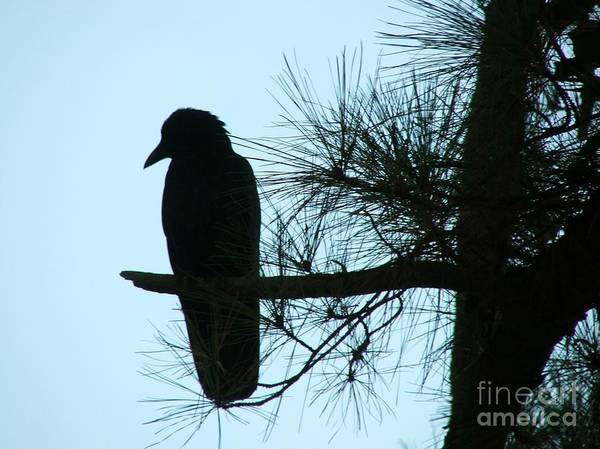 Photograph - Unknown Visitor by Rosanne Licciardi