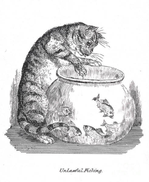 Photograph - Unlawful Fishing Cat Paws At Goldfish by Wellcome Images