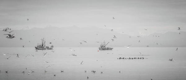 Photograph - Unlimited Action Herring Season by Roxy Hurtubise