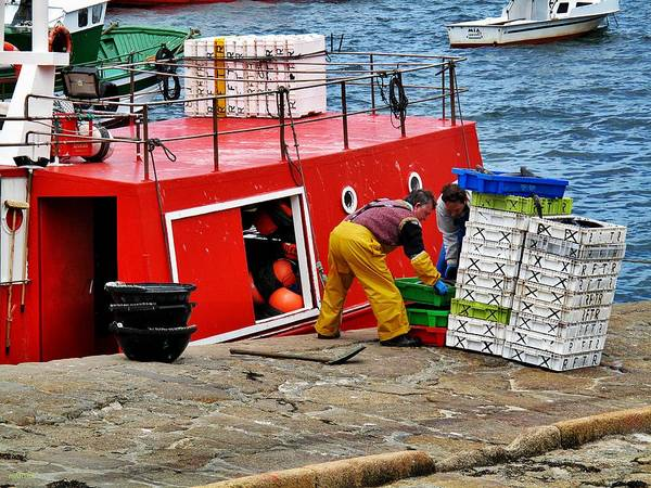 Galicia Photograph - Unloading The Catch by Martine Murphy