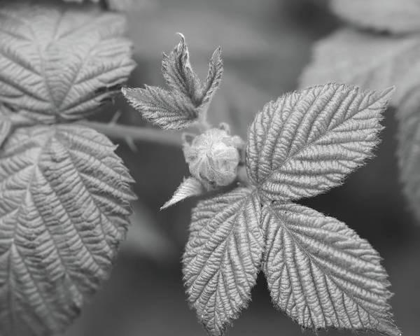 Photograph - Unopened Spring Bud U by Jacek Wojnarowski