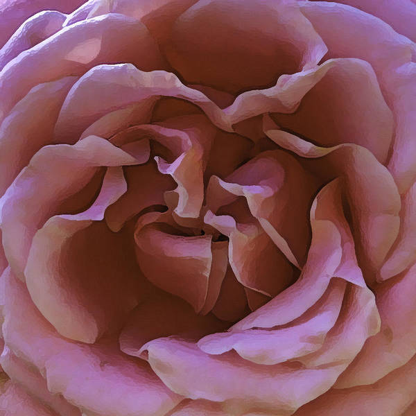 Wall Art - Photograph - Unpicked Rose by Paula Porterfield-Izzo