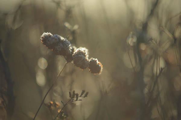 Photograph - Unsteady by Alexander Kunz