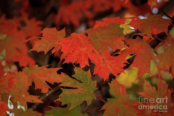 Photograph - Untouchable Silver Maple Fall Leaf Art by Reid Callaway