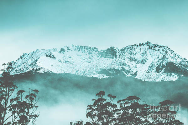 Tree Top Photograph - Untouched Winter Peaks by Jorgo Photography - Wall Art Gallery