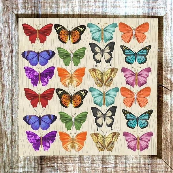 Painting - Colourful Butterflies Collage by Shabby Chic and Vintage Art