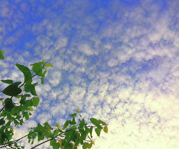 Photograph - Up by Atullya N Srivastava