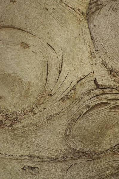 Wall Art - Photograph - Up Close-1 by Dahlia Tumavicus