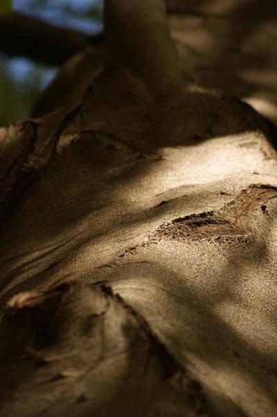 Wall Art - Photograph - Up Close-2 by Dahlia Tumavicus