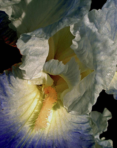 Photograph - Up Close And Beautiful by Lynda Lehmann
