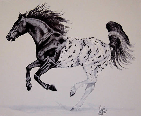 Appaloosa Drawing - Up Close And Personal With Appaloosa's by Cheryl Poland