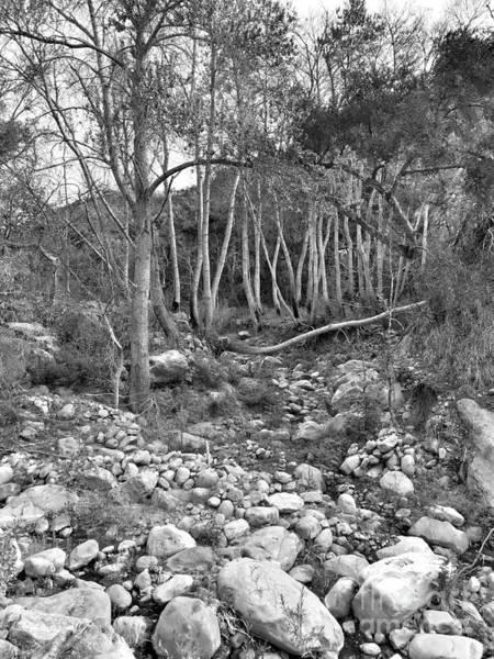 Photograph - Up The Creek by Jenny Revitz Soper