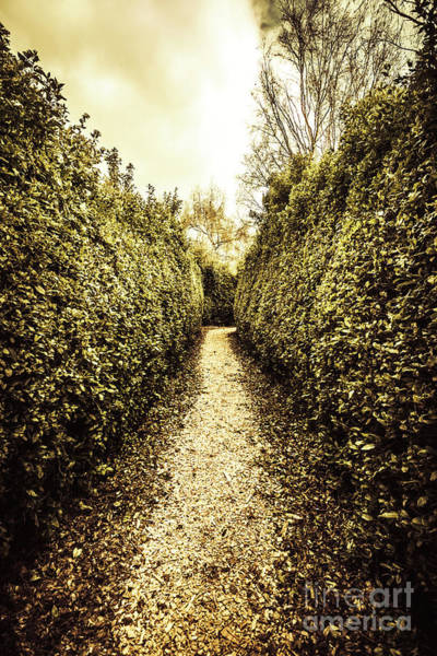 Wall Art - Photograph - Up The Garden Path by Jorgo Photography - Wall Art Gallery