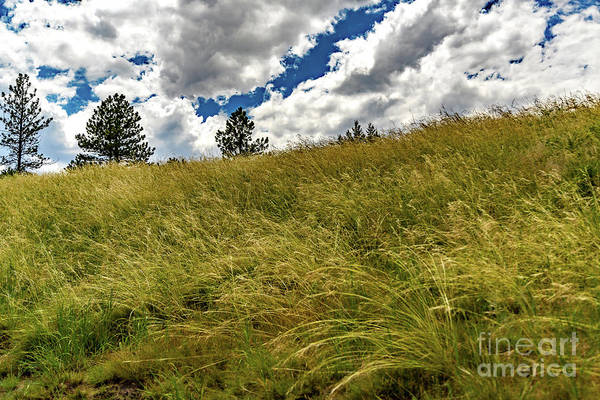 Photograph - Up The Hill by Jon Burch Photography
