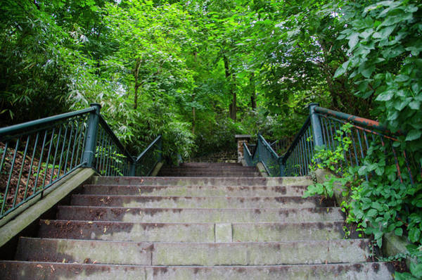 Photograph - Up The Hundred Steps - Wissahickon by Bill Cannon