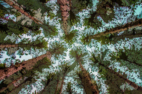 Photograph - Up Through The Pines by Michael Arend