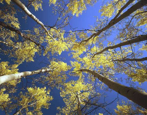 Photograph - Up To The Aspens 1m3911 by Ed  Cooper Photography