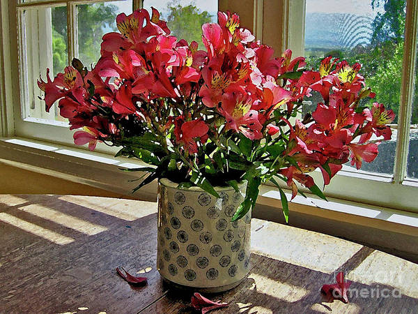 Photograph - Upcountry Flowers by Bette Phelan
