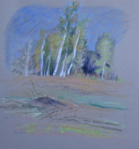 Catskill Drawing - Uphill To The Poplars by Bonnie See