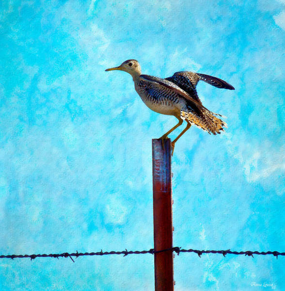 Photograph - Upland Sandpiper by Anna Louise
