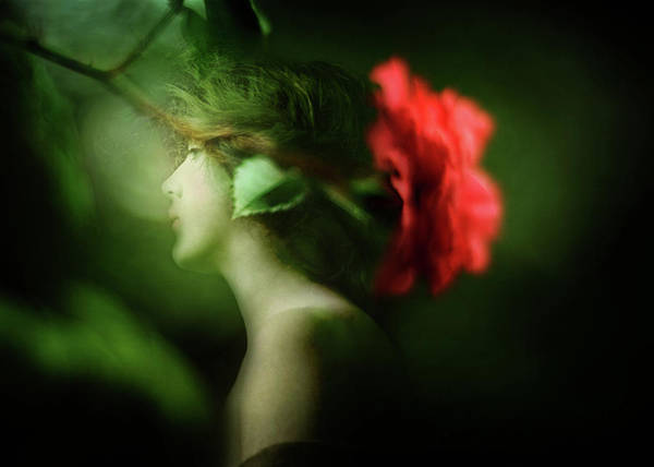 Photograph - Upon The Green Night by Rebecca Sherman