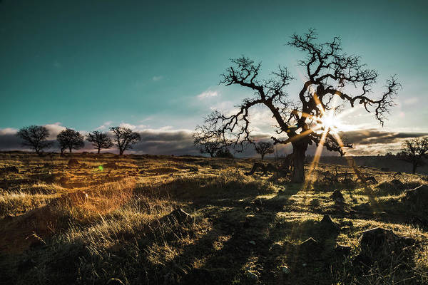 Photograph - Upper Bidwell Park by Lee Harland