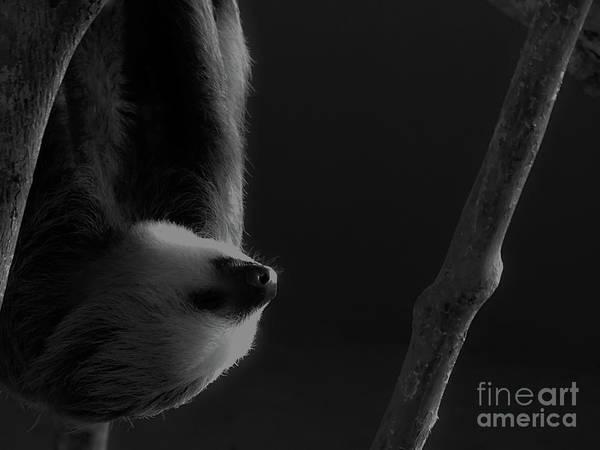 Upside Down Sloth Art Print