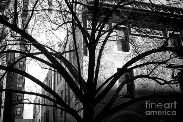 Photograph - Uptown Tree Arms by John Rizzuto
