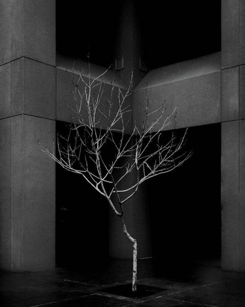 Wall Art - Photograph - Urban Nature In B/w by Joseph Smith