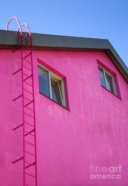 Photograph - Urban Pink by Elena Nosyreva