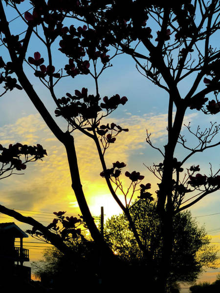Photograph - Urban Sunrise 2 by Cate Franklyn