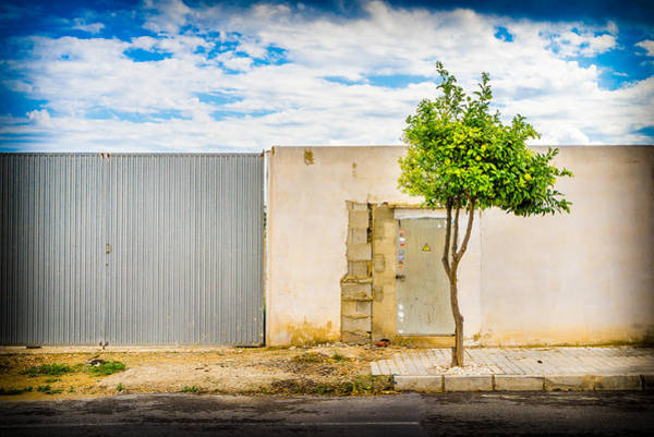 Photograph - Urban Tree. by Gary Gillette