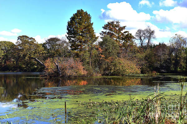 Wall Art - Photograph - Urieville Pond by Skip Willits