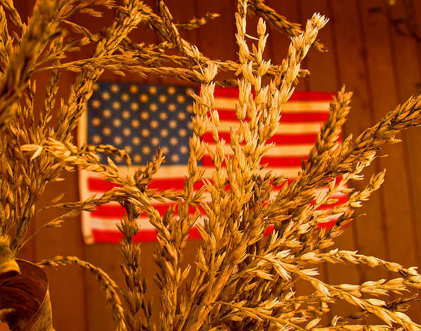 Photograph - U.s. Wheat by John Hartman