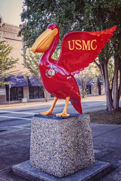 Pensacola Photograph - Usmc Pelican On Parade by Joan Carroll
