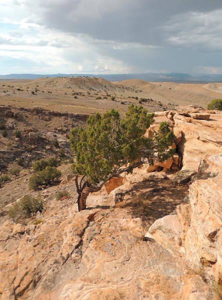 Photograph - Utah Desert Study by Andrew Chambers