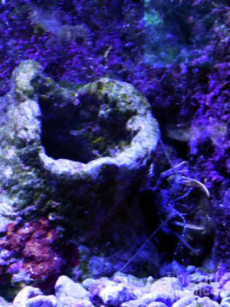 Digital Art - Uw Coral Stone by Francesca Mackenney